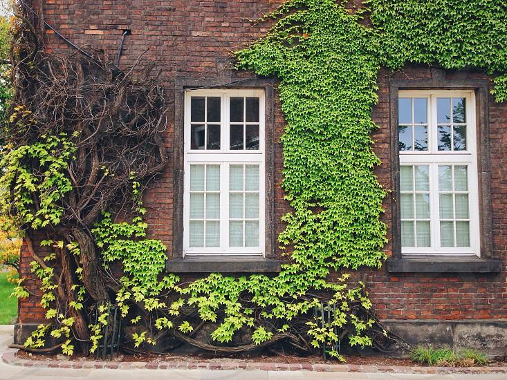 Windows tree wall photo
