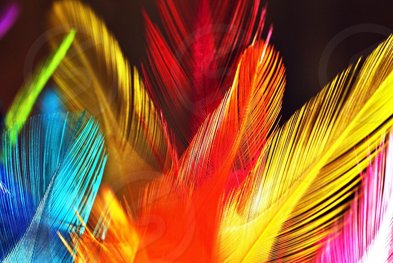 orange yellow red pink and blue feathers photo