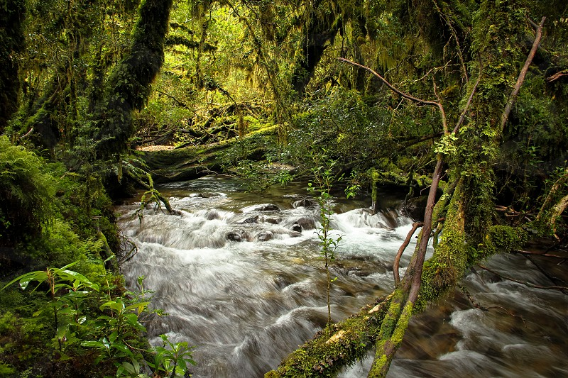 Along the Enchanted Forest Trail Queulat National Park Patagonia Chile. Lush jungle invigorating river. photo