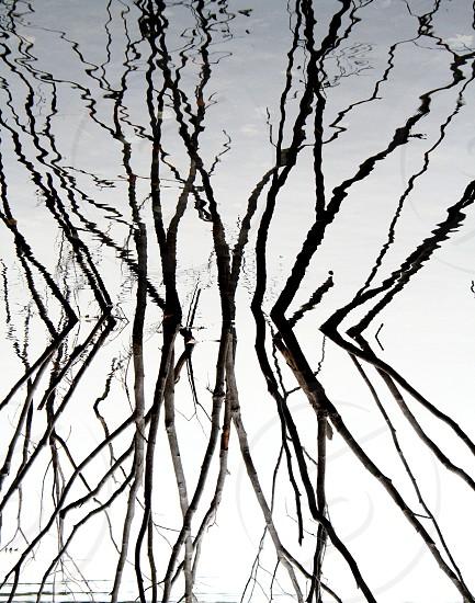 Sticks in Walden Pond photo