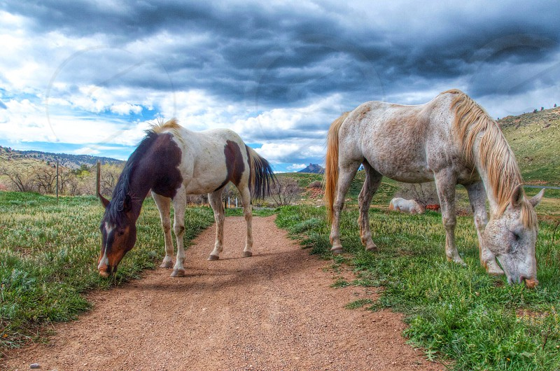 Horses on a trail. photo
