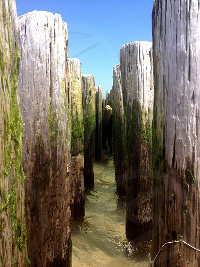 tree logs lined up photo