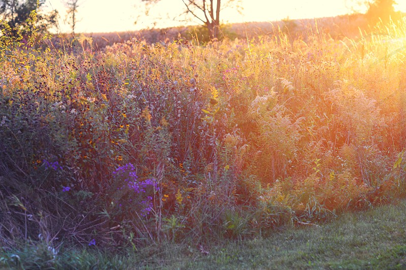 Midwest meadow at sunset in autumn with lens flare photo