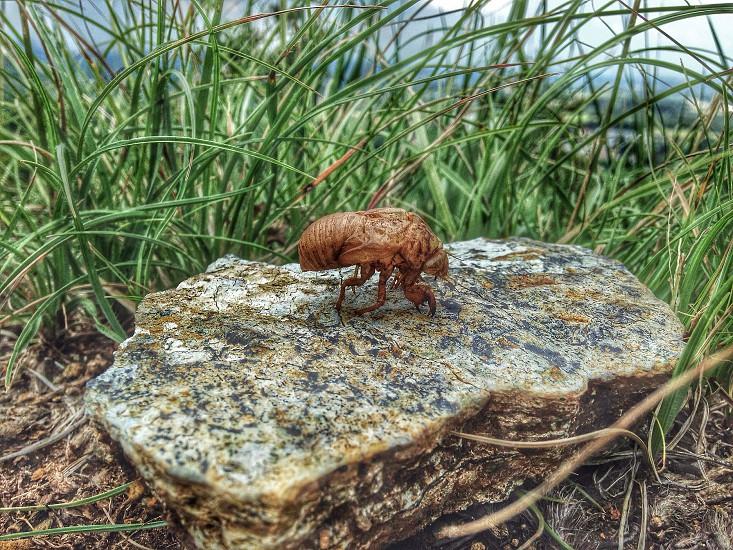 Cicada macro  photo