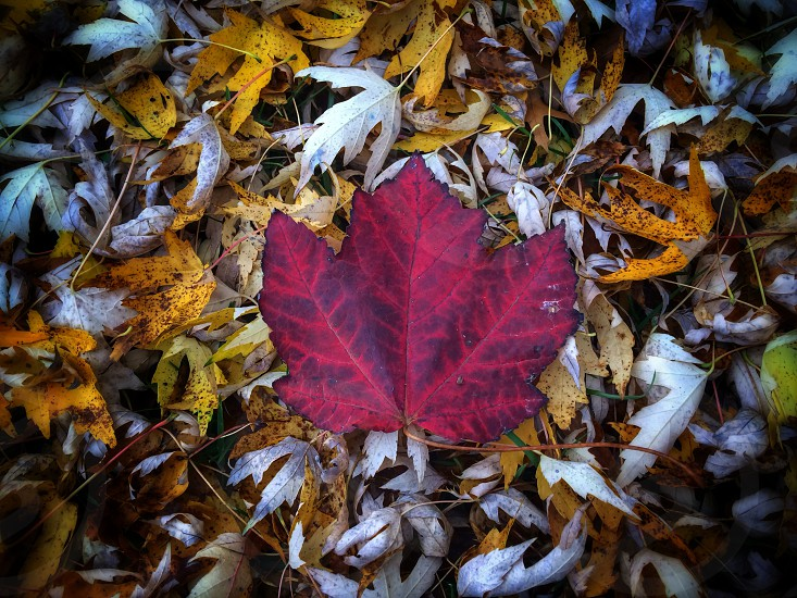 pink dried leaf photo