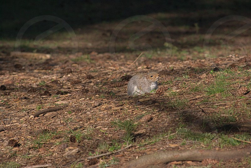 Blending rodent squirrel still quiet patient careful nature wildlife photo