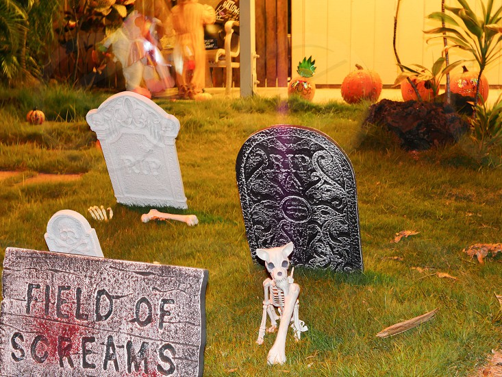 Halloween house yard decoration graves and  skeletons  photo