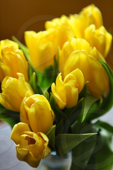 Give thanks yellow tulips gift present photo