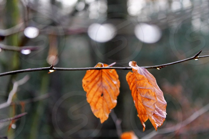 up close on a winter tree rain drops morning dew winter leaves photo