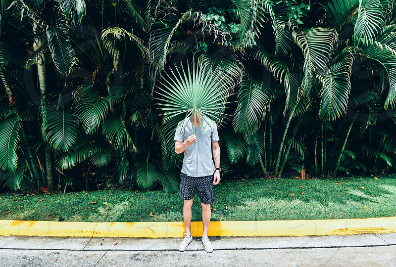 palm leaf palm leaves tropical flora fashion man photo