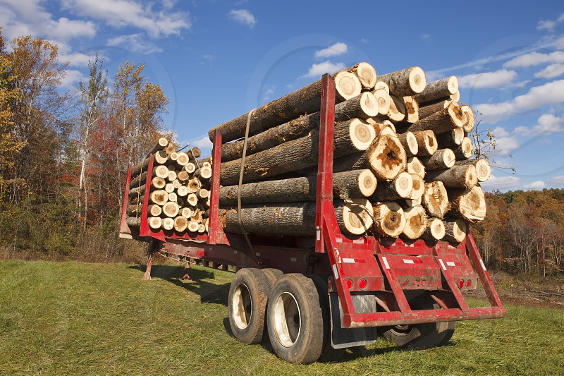 Wood grain - load of logs photo