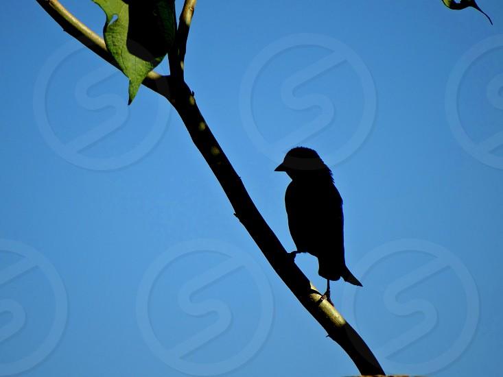 A little sparrow bird pose against the light. photo