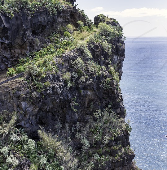 rocks with flowers and cactus on madeira island photo