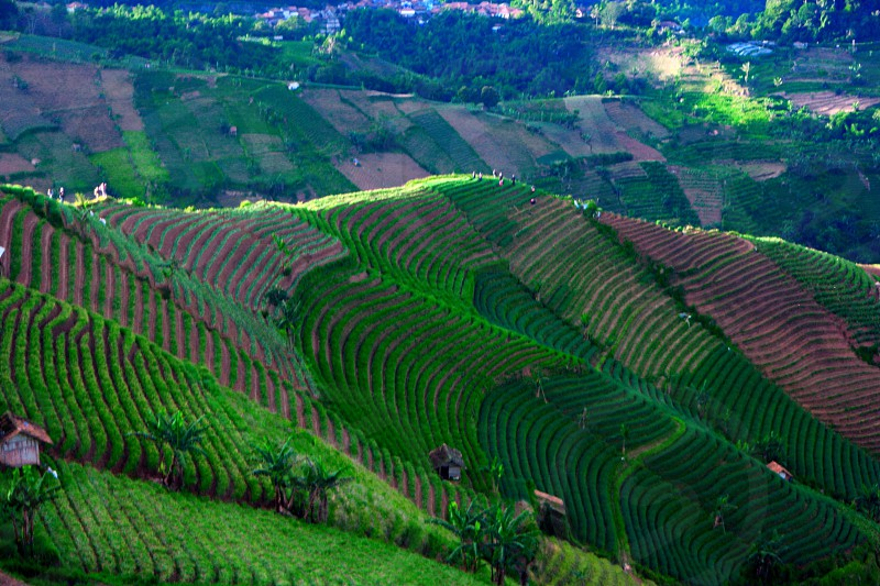 spring onions terrace in Majalengka West Java Indonesia photo