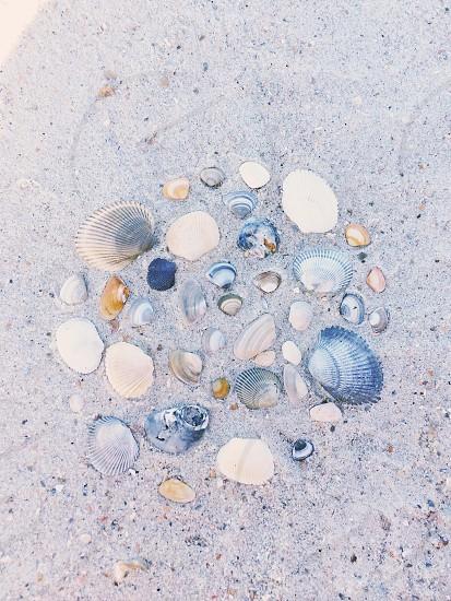 Shells in the sand on the beach. Fernandina Beach Amelia Island Florida.  photo