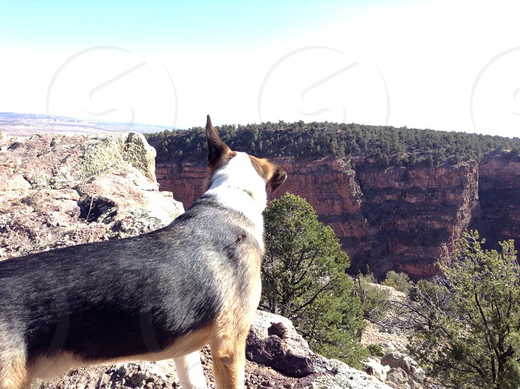 Dogs view of red rock rock canyon photo