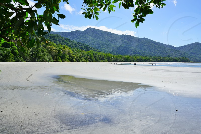 Daintree Rainforest - Cairns Queensland Australia photo