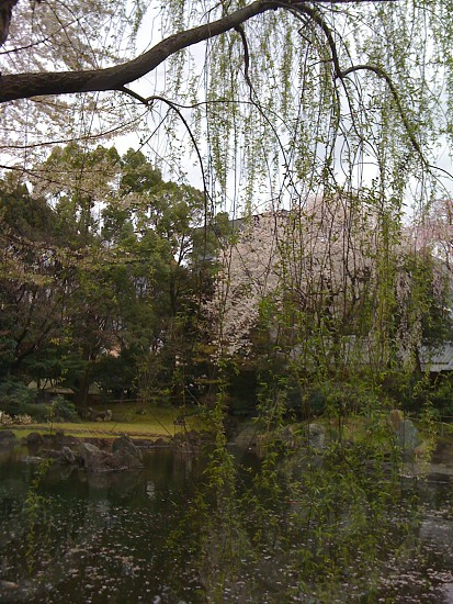 pond with flowers photo