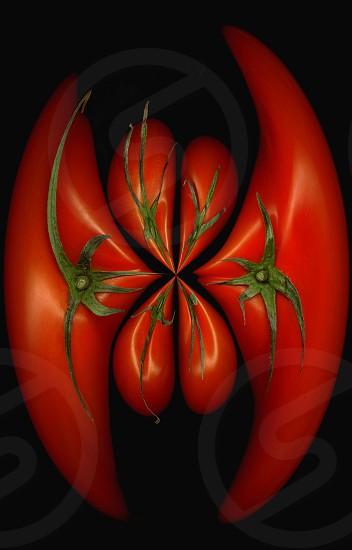 fresh tomatoes on black background round distortion effect photo