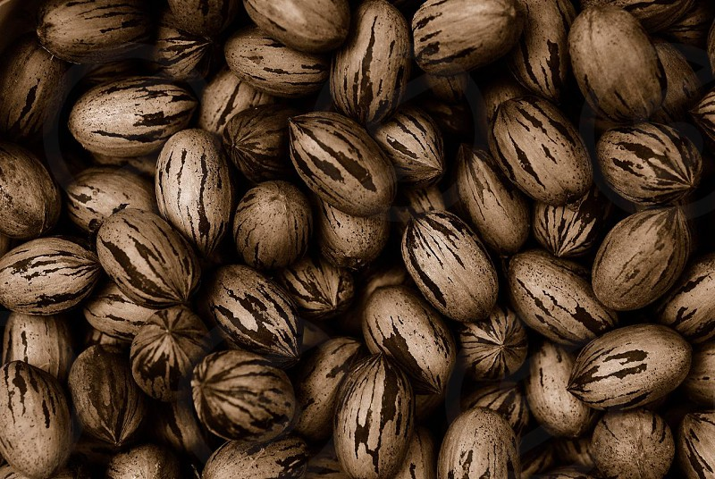 Pecans in their shells photo