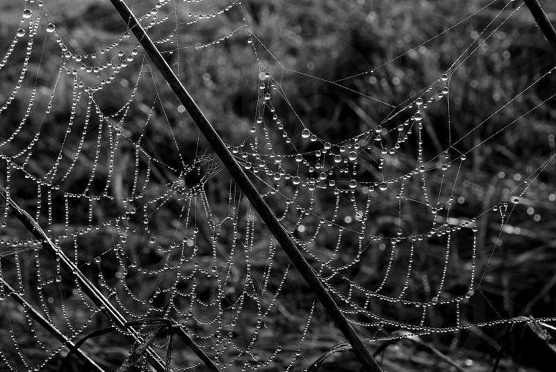 spider net net net with water drop water drop water photo