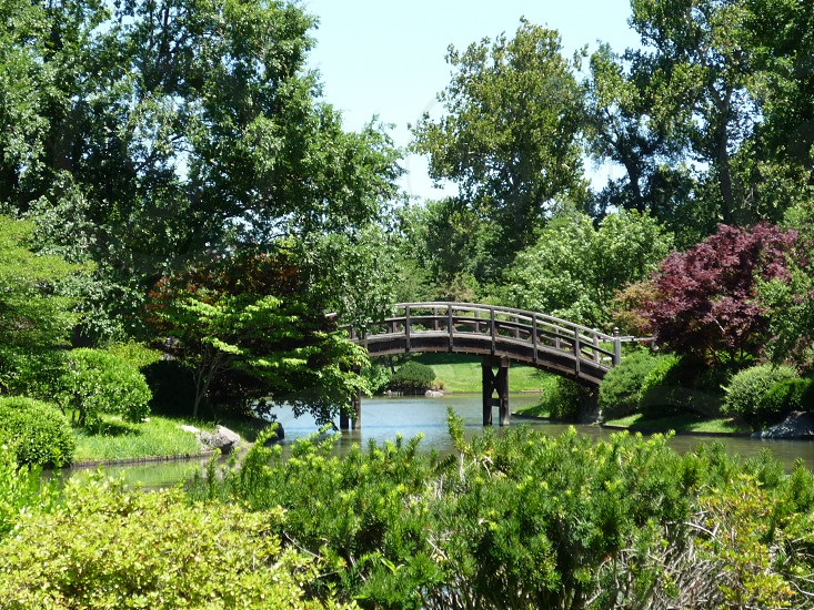 Curved bridge in Missouri Botanical Gardens St. Louis photo