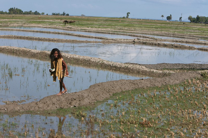 farmers at a Ricefield near the town of Loihuno in the east of East Timor in southeastasia. photo