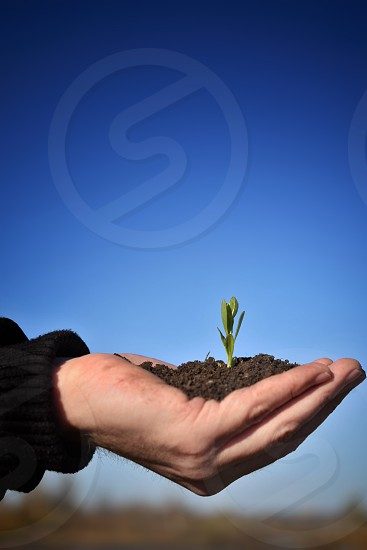 left human hand with brown soil on hand with green leaf plant photo