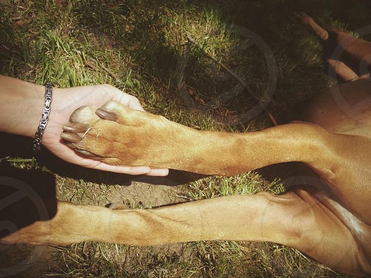 brown dog paw photo