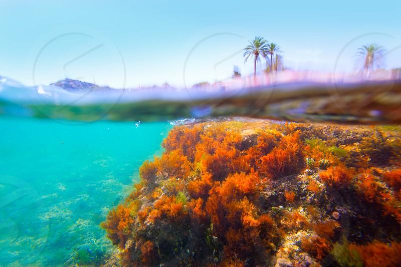 Mediterranean underwater seaweed in Denia Alicante spain photo