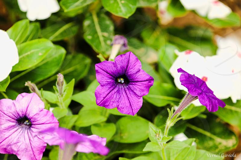 Photography macro flower nature macro photography blooms violet purple photo