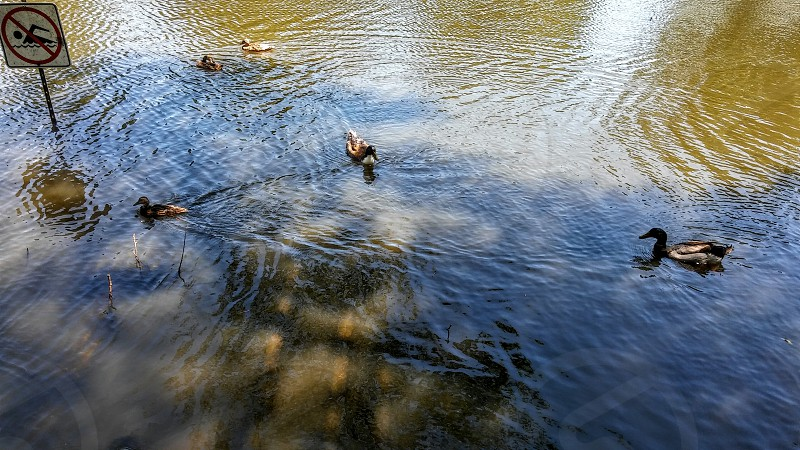 Buchanan Park No Swimming for us Only Ducks photo