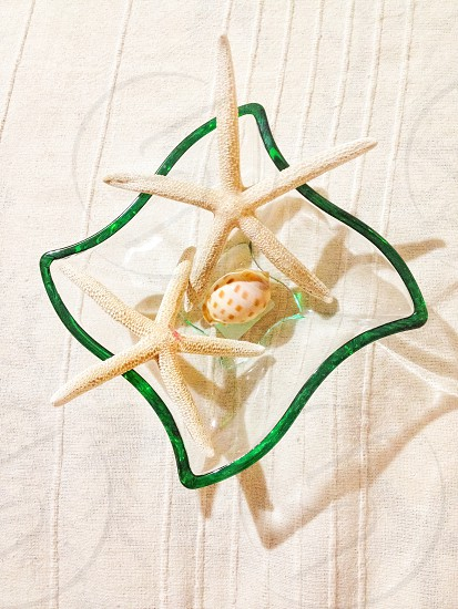Glass container with starfishes and a shell photo