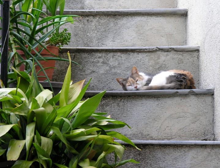Cat asleep on steps. Peillon France photo