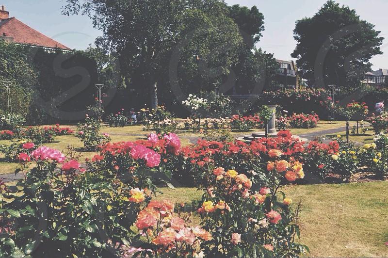 flower garden view photo