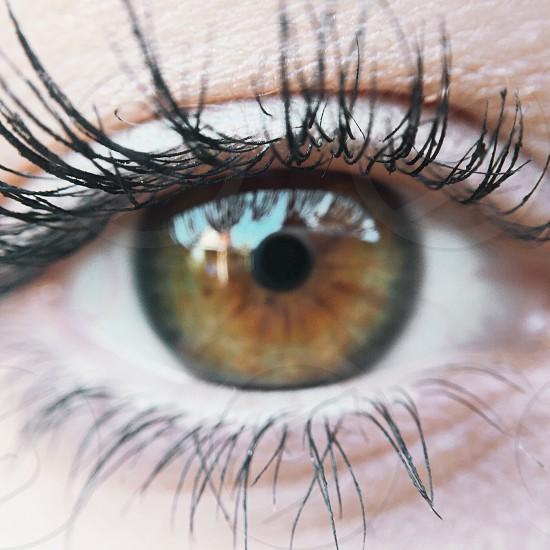 woman's eyelashes with black mascara photo