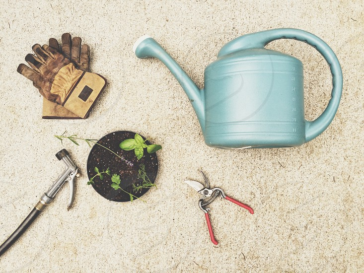 green watering can near gray garden shears green oval leaf potted plant and gardening gloves and hose photo