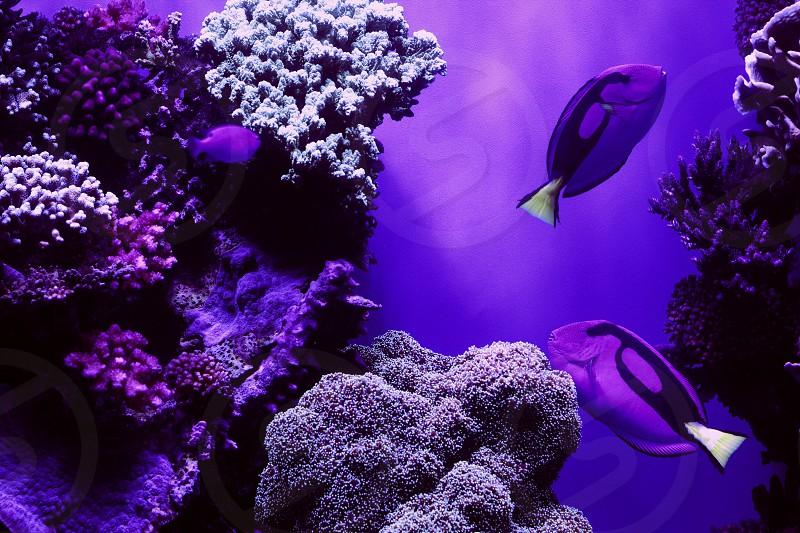 Aquarium Monterey Bay reefs Ocean sea coast Fish ocean creatures purple photo