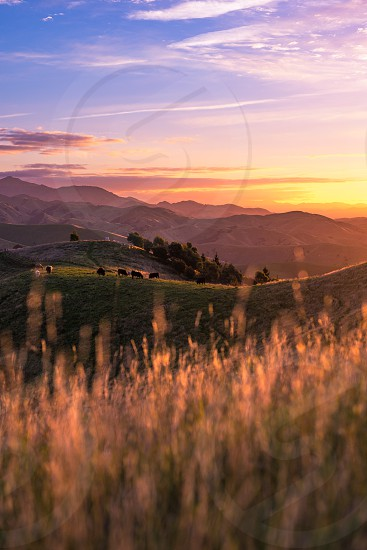 Wither Hills Farm Park at sunset photo
