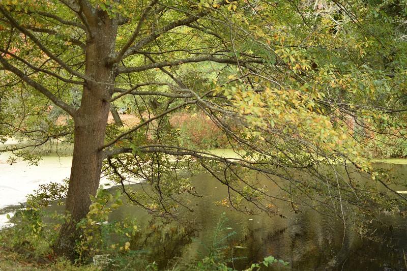 Back roads Williamsburg  photo