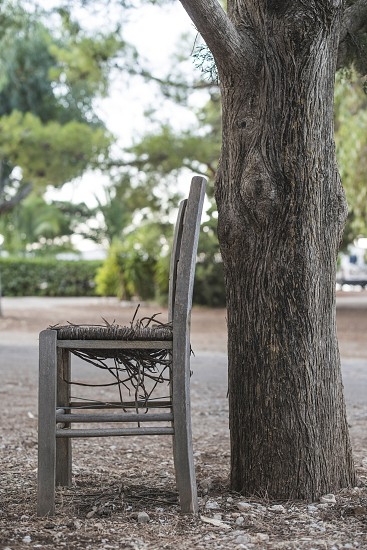 Vintage greek chair and a tree. Greece photo