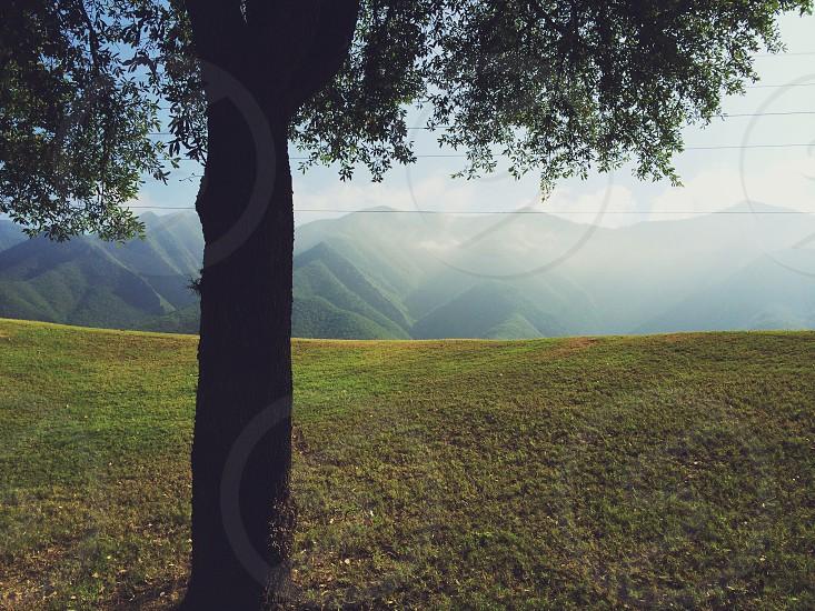 green tree on green mountain range during daytime photo