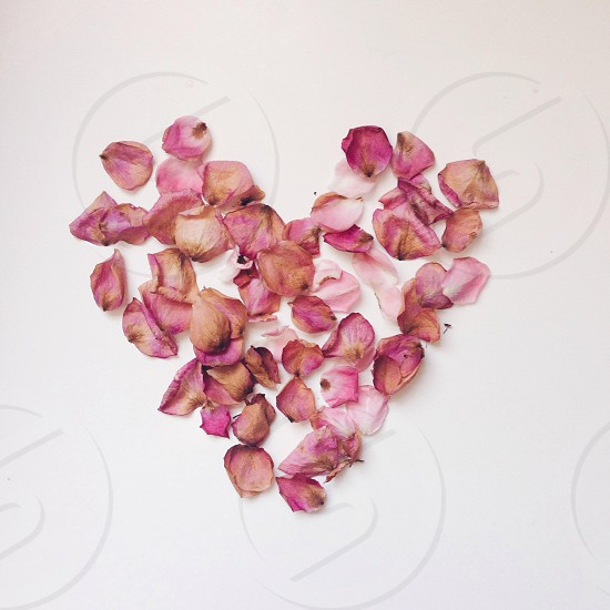 pink flower petals forming heart shape photo