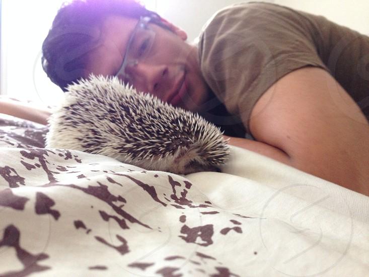 Good morning Waking wake up hedgehog pet  photo