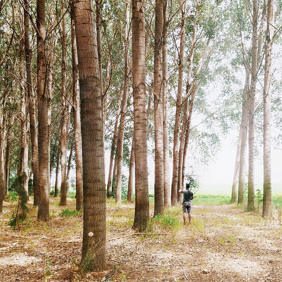 man in black shirt crossing dirt pathway between green trees photo