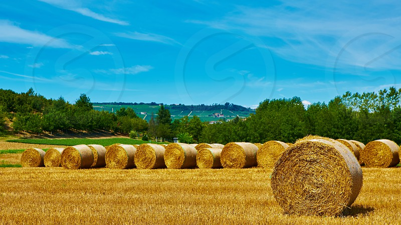 rolls summer straw outdoor sunlight grain tree meadow agriculture autumn hay yellow wheat scenery grass farm season round corn color fall rural harvesting country golden package land bale harvest food cloud farmland field crop stack haystack countryside farming agricultural gold blue plant sky nature harvested ranch dry landscape cereal photo
