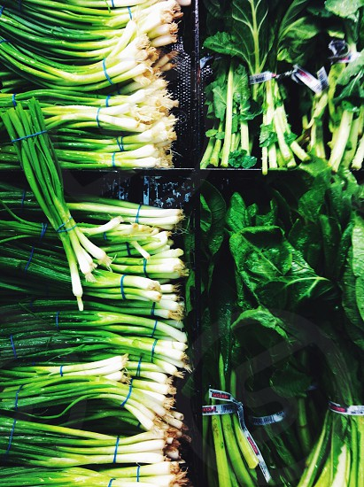 spring onions water spinach and pechay on display photo