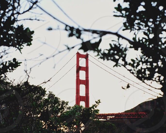 red bridge surrounded by trees during daytime photo