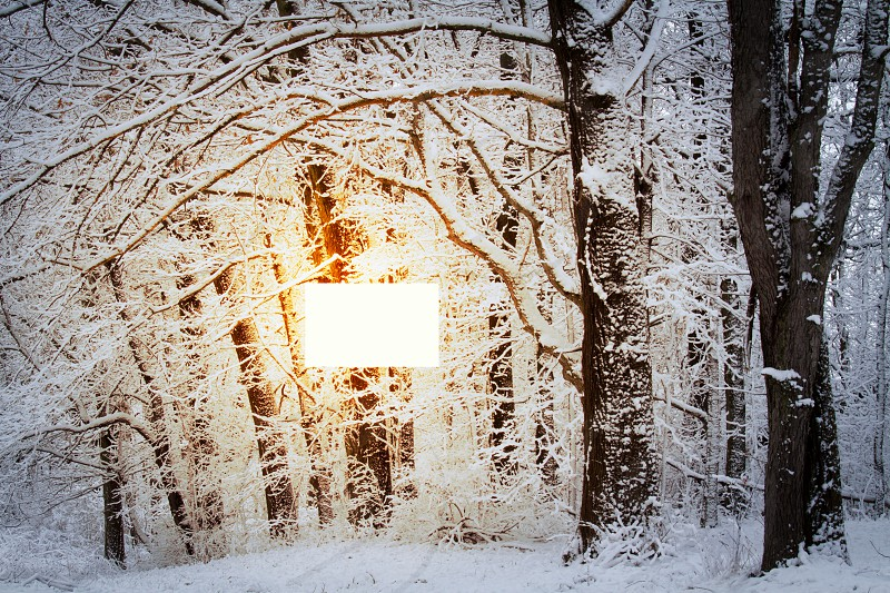 A light in the winter woods photo