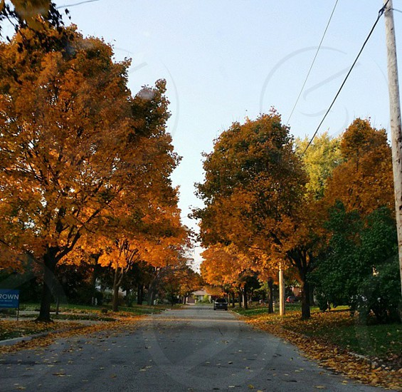 maple trees and leaf falling on ground photo